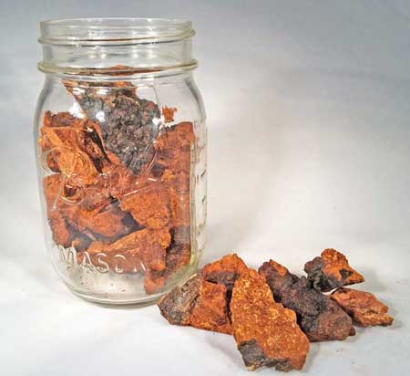 benefits of chaga extract